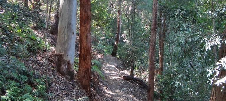 Byrrill Creek walking track Trail Hiking Australia