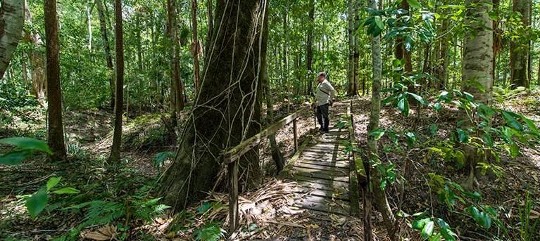 Cabbage Palm loop walking track Trail Hiking Australia