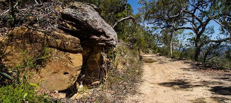 Canoelands Ridge walking track Trail Hiking Australia