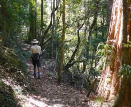 Casuarina Falls circuit Trail Hiking Australia