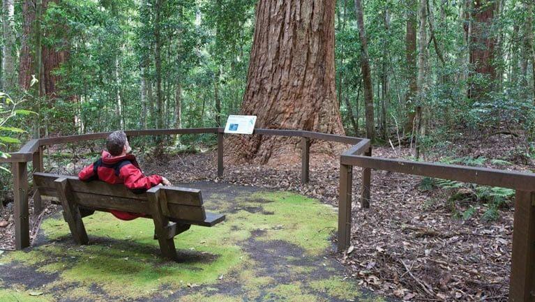 Coachwood loop track Trail Hiking Australia
