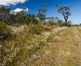 Cooks Nose walking track Trail Hiking Australia