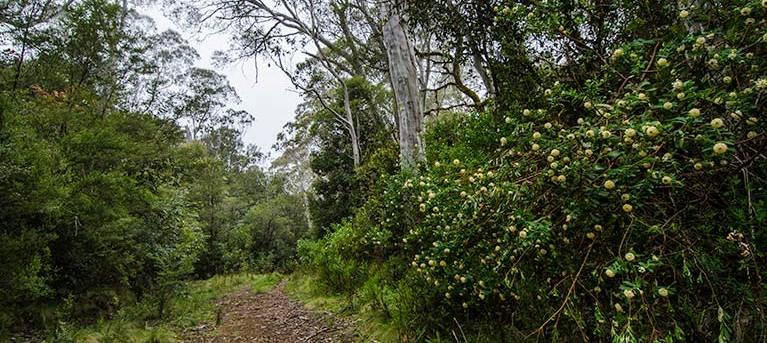 Corker trail Trail Hiking Australia