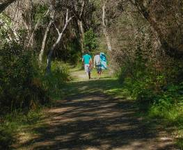 Crowdy Gap walking track Trail Hiking Australia