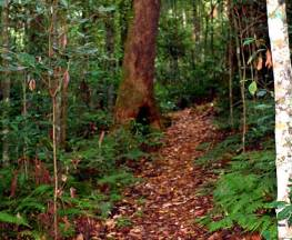 Culmaran loop trail Trail Hiking Australia