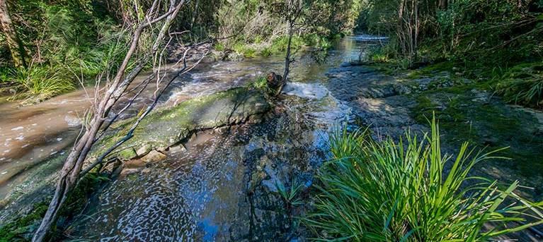 Dawson River walking track Trail Hiking Australia