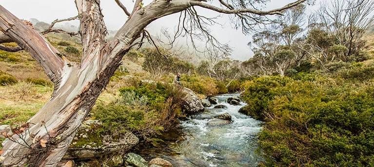Dead Horse Gap walking track Trail Hiking Australia