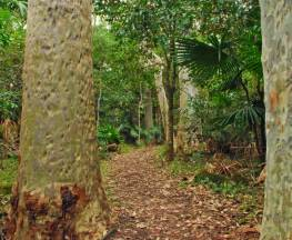 Depot Beach Rainforest walk Trail Hiking Australia