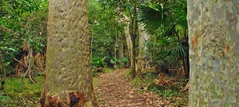 Depot Beach Rainforest walk Trail Hiking Australia