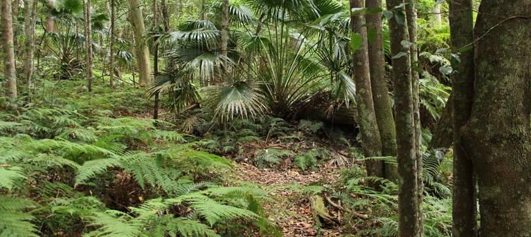 Durras Lake Discovery trail Trail Hiking Australia