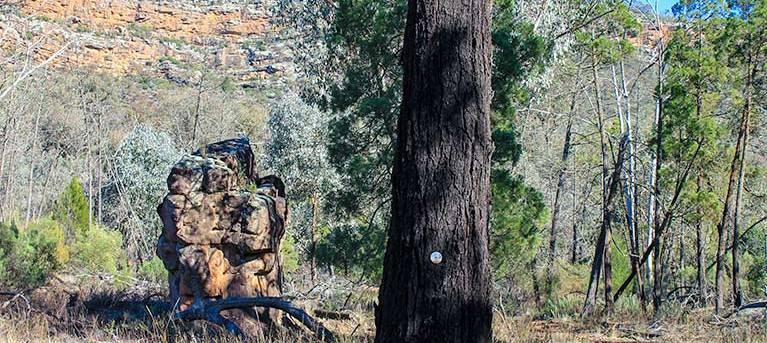 Eualdrie walking track Trail Hiking Australia
