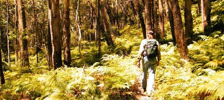Federal Pass Trail Hiking Australia