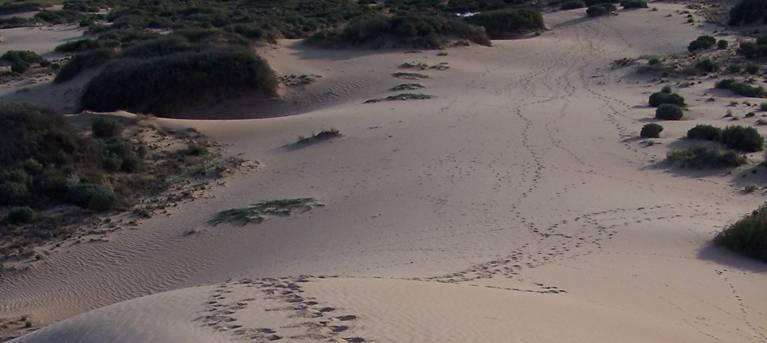 Foreshore walk Trail Hiking Australia