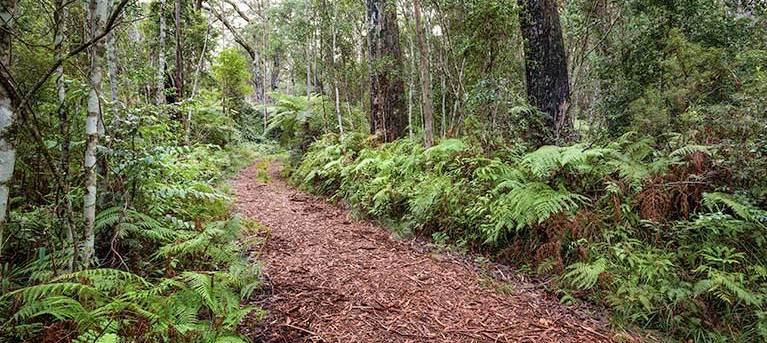 Forest walking track - Gibraltar National Park Trail Hiking Australia