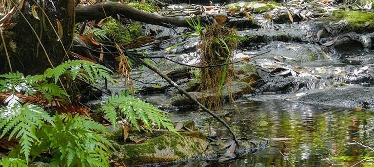 Forest walking track Trail Hiking Australia