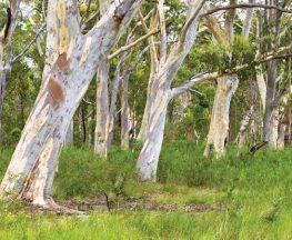 Freshwater track Trail Hiking Australia