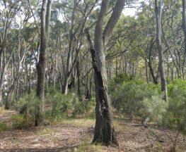 Gap Beach walking track Trail Hiking Australia