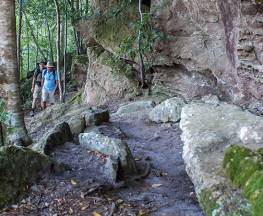George Boyd Rainforest walking track Trail Hiking Australia