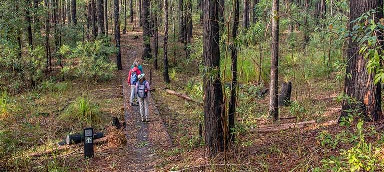 Giriwa walking track Trail Hiking Australia