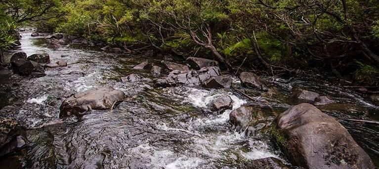 Gloucester River walking track Trail Hiking Australia