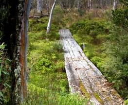 Gloucester Tops circuit Trail Hiking Australia