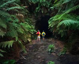 Glow Worm Tunnel walking track Trail Hiking Australia