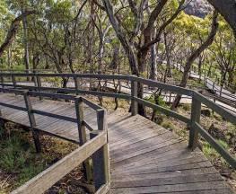 Governor Summit (Corrunbral Borawah) walking track Trail Hiking Australia