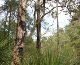 Grass Tree circuit Trail Hiking Australia