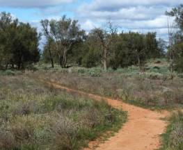 Grasslands Nature trail Trail Hiking Australia