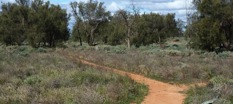 Grasslands Nature trail Trail Hiking Australia