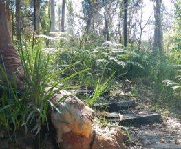 Great North walk - Lane Cove National Park Trail Hiking Australia