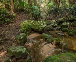 Great North walk - Palm Grove Nature Reserve Trail Hiking Australia