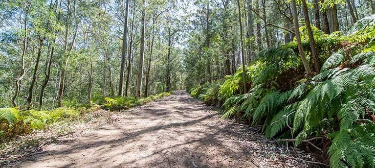 Great North walk - Watagans National Park Trail Hiking Australia