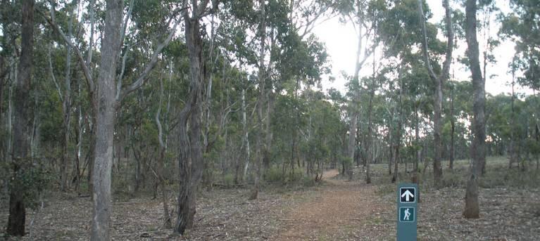 Green track Trail Hiking Australia