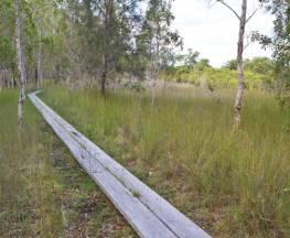 Gummigurrah walking track Trail Hiking Australia