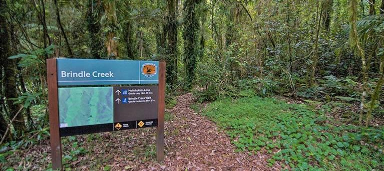 Helmholtzia loop walking track Trail Hiking Australia