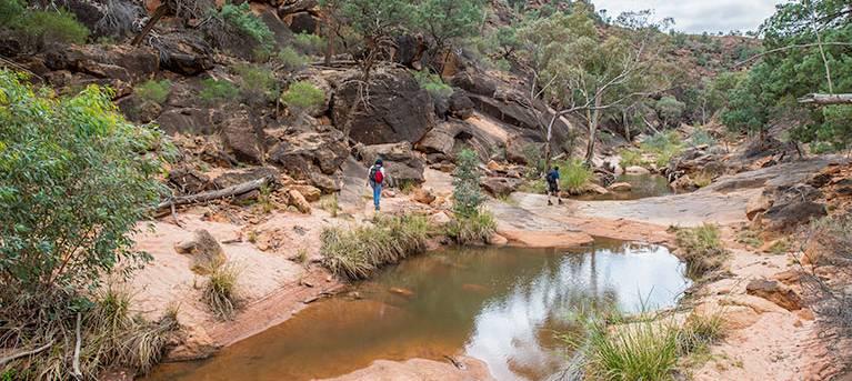 Homestead Gorge trail Trail Hiking Australia