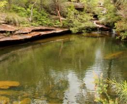 Hominy Creek walking track Trail Hiking Australia
