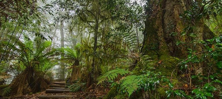 Honeysuckle Forest track Trail Hiking Australia