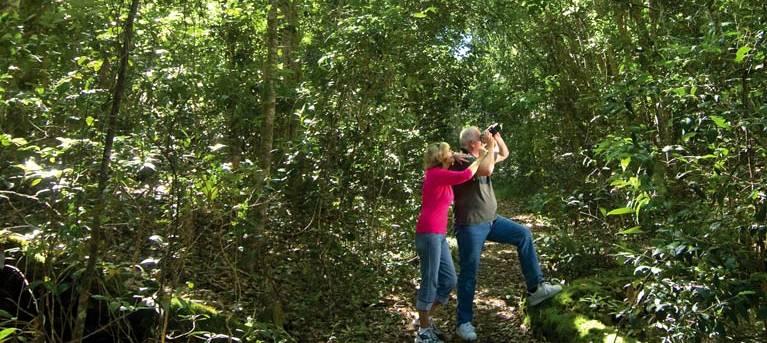 Iluka Rainforest walking track Trail Hiking Australia