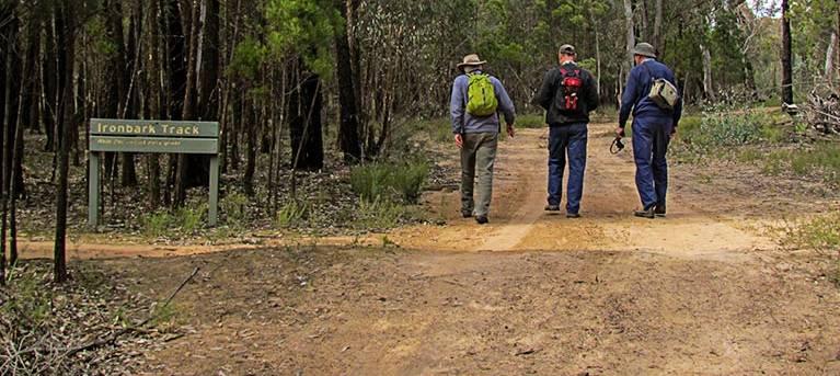 Ironbark walking track Trail Hiking Australia