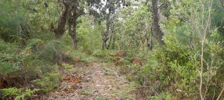 Kinchela Trig Lookout walk Trail Hiking Australia