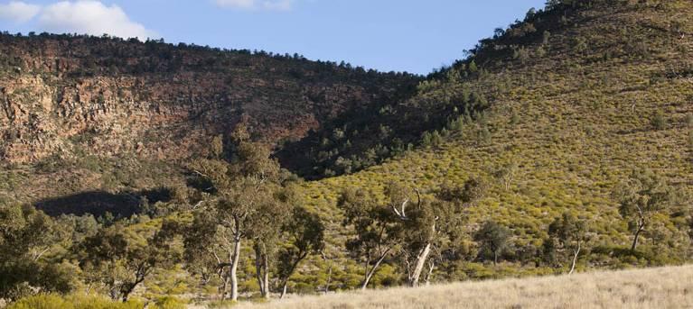 Little Mountain walking track Trail Hiking Australia