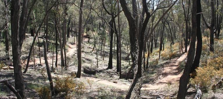 Livingstone multi-use track Trail Hiking Australia