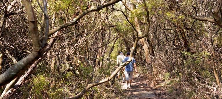 Lyrebird Dell walking track Trail Hiking Australia