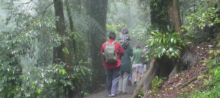 Lyrebird Link track Trail Hiking Australia