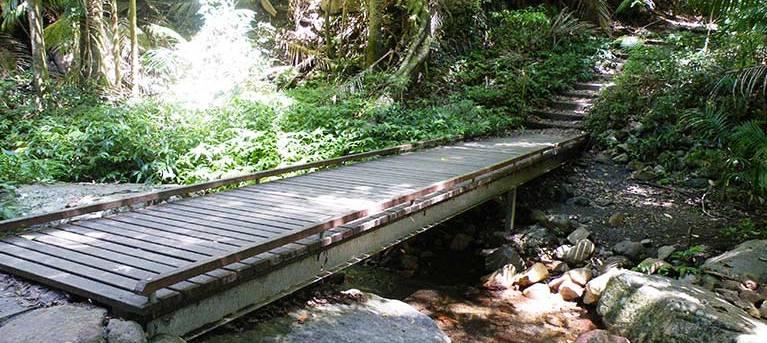 Lyrebird track Trail Hiking Australia