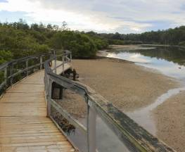 Mangrove walk Trail Hiking Australia