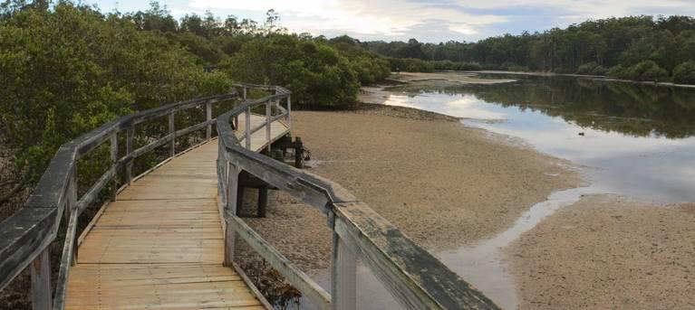 Mangrove walk Trail Hiking Australia