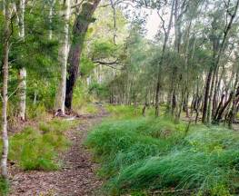 Meroo Lake walking track Trail Hiking Australia